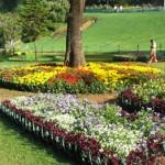 botanical_garden16