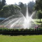 botanical_garden18