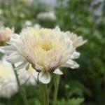 botanical_garden3