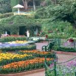 botanical_garden8